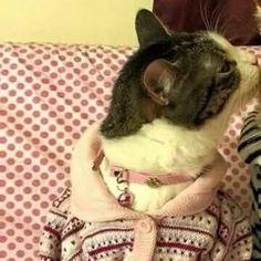 Metadinha #12 Baby Animals, Funny Animals, Cute Animals, Cute Cats Photos, Cat Aesthetic, Couple Wallpaper, Avatar Couple, Cute Creatures, The Villain