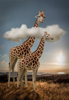 Head in the Clouds by Lynne Morris on 500px