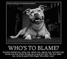 I have a blue and black full blooded Pit Bull and your gonna get scared of my dogs cause how other people raise them and treat them. You better look the other fucking way then cause thats all I will ever have.