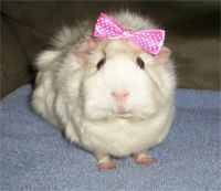 Peggy Piggy has recovered from the flu and is feeling 'In The Pink' again !