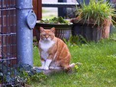 Un gato en el jardín