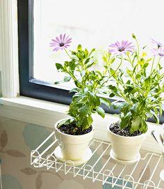 diy ideas - window sill herb garden