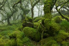 duncangeorge:  Moss