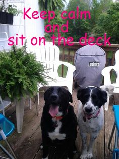 Lab mix and Border Collie, Keep Calm Thats my Dottie && My Roxie!!:)
