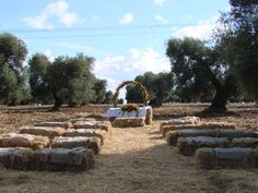 Ceremony among the Apulian olive trees