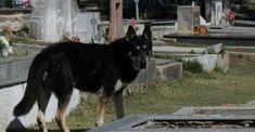 Argentina: Murió perro que visitó durante 10 años la tumba de su dueño
