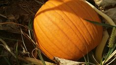 Jack o lantern ready for harvest at the annual Oktoberfest, Oct 25th.
