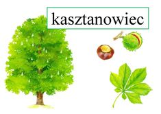 Drzewa, owoce, liście Ania Jóźwina Plansze edukacyjne Pomoce dydaktyczne Polish Language, Kids Learning, Diy And Crafts, Herbs, Plants, Aster, Animal, Geography, Herb