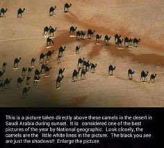 Camels in Saudi Arabia. This photo is taken directly above and the black camels are actually. Enlarge photo to see the camels (whitish). Photo of the Year by National Geographic. Great Photos, Cool Pictures, Amazing Photos, Interesting Photos, Interesting Facts, Special Pictures, Sunset Pictures, Beautiful Pictures, Black Camel
