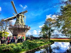 The Tulips Garden  Holland  Share Photo with Us with #worldtravely by worldtravely