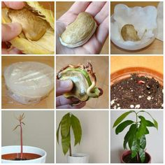 16 fruits and vegetables to grow from their leftovers - guiranora - # . - 16 fruits and vegetables to grow from their leftovers – guiranora – -