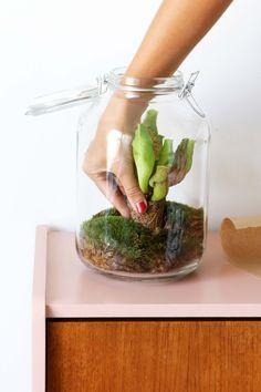 MY ATTIC voor vtwonen / groen / planten / greens / plants / terrarium / weckpot Fotografie: Marij Hessel