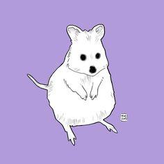 Western Australia day 23: Quokka quokka eh eh. Buy this print here: http://ift.tt/1W9ik3V #art #aussie #australia #amazing_wa #aussiephotos #rottnest #rottnestisland #quokka #cute #etsy #etsyshop #perth #perthisok #perthlife #instaart #illustration #iloveperthlife #magicgallery #travel #ausfeels #westernaustralia #instaart #drawing #nursery #sketch #bcn #rotto #animal #adorable #fineart by 31daysin http://ift.tt/1L5GqLp