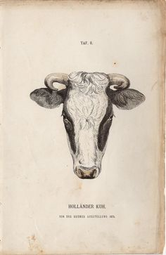 print cattle cow   1885 Rare Antique Cattle Cow Print by TheLotAntiquePrints on Etsy