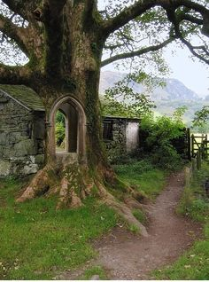 Fake - Tree Portal, Ireland - It is not real. There is a cottage running along behind the tree. Yet, looking through the tree you can see green shrubs. Places To Travel, Places To See, The Places Youll Go, Beautiful World, Beautiful Places, Beautiful Pictures, Amazing Photos, Beautiful Boys, To Infinity And Beyond