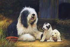Old English Portraits | old english sheepdog print rmle17 limited edition of 150 old english ...
