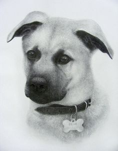 Graphite drawing of a puppy