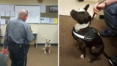 These Cops Are So Proud Their Newest K9s Are Rescue Pit Bulls