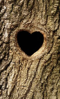 Heart tree via Shutterstock