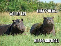 Hippo-critical.