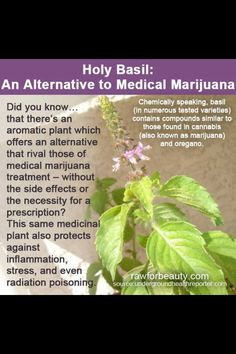 Holy Basil..supposed to help with anxiety and have other benefits too