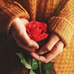 Hand Photography, Winter Photography, Photography Ideas, Rose In Hand, Girls Dp For Whatsapp, Flower Girl Photos, Islam Women, Holding Flowers, Flowers For You