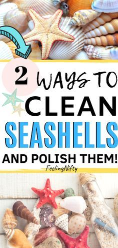 Outstanding cleaning hacks tips are available on our internet site. Check it out. Outstanding cleaning hacks tips are available on our internet site. Check it out and you will not b Seashell Art, Seashell Crafts, Beach Crafts, Home Crafts, Diy Crafts, Starfish, Crafts With Seashells, Seashell Painting, Fall Crafts