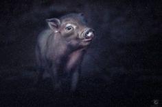 Lucky pig by Manuela Kulpa on 500px