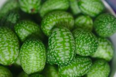 Taste of the Season Cucamelon are cute, palm-sized cucumber-like fruits that look like tiny watermelons. They have a refreshing cucumber taste with a hint of citrus.