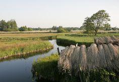 Beautiful place in the Netherlands: WaterReijk Weerribben Wieden (WaterReijk.nl/en)