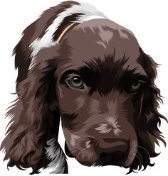 English Springer Spaniel, Dog Portraits, Animal Paintings, Sewing Projects, Beautiful Pictures, Cartoon, Manga, Logo, Pets