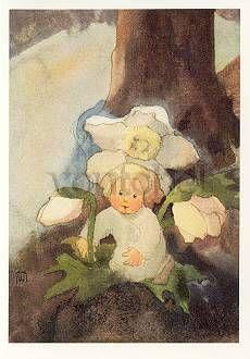 Mili Weber (1891-1978), The little Christmas Rose