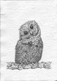 Peter Tugwell. Western Sceech Owl. #inkdrawing #artcollective #sydneyartists #artsy #recycledpaper #birds #artmarkets #original #owls #Alaska #screechingowl  #sketch #sketching #draw #drawing #pencil  #galleryart #arte #illustration #artwork #artist #art #fineart #traditionalart #creative #creativity #progress Led Pencils, Pencil And Paper, Cockatoo, Artist Art, Traditional Art, Owls, Sketching, Alaska, Art Gallery