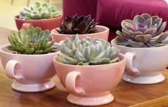 Just a cuppa filled with succulents Succulents In Containers, Cacti And Succulents, Planting Succulents, Garden Plants, Indoor Plants, Planting Flowers, Succulent Gifts, Succulent Arrangements, Cactus Y Suculentas