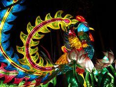 La Magie des lanternes au jardin botanique de Montréal, via Flickr. Painting, Gardens, Chinese Lanterns, Painting Art, Paintings, Painted Canvas, Drawings