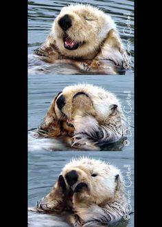 I otter see no evil, speak no evil, hear no evil