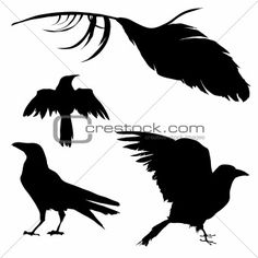 Illustration of Vector silhouette set of a crow, raven, bird, and feather. vector art, clipart and stock vectors. Crow Silhouette, Silhouette Drawings, Crow Flying, Raven Bird, Halloween Silhouettes, Raven Tattoo, Theme Halloween, Halloween Patterns, Halloween Crafts