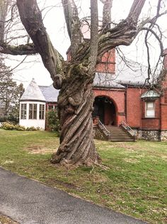 From Our Friends – Lincoln, Massachusetts Library Tree   Crystal Life