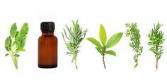 On compte 10ml d'amande douce et 8 goutes d'huiles essentielles Demandez conseil à votre pharmacien. LA LAVANDE : Faites respirer au cheval l'huile de lavande et il calmera son stress.Vous pouvez a...