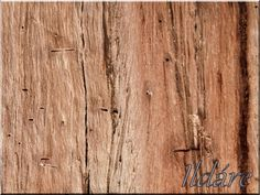 Öreg fa felülete