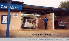 Funny car wash pictures and jokes. The ultimate car wash - Texas style Puns Jokes, Funny Puns, Funny Stuff, Funny Things, Stupid Stuff, Funny Moments, Texas Humor, Texas Meme, Texas Quotes