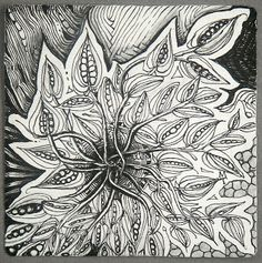 Inspiration.  Zentangle to enhance my botanical drawings.