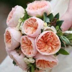 Juliet David Austin roses