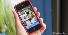 App Could Help Find Replacement for Your Dead Pet