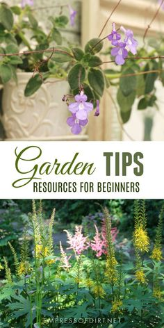 Is your clematis turning brown? What kind of hydrangea is this and when should I prune it? How can I have big, tall delphiniums? Which live plants are best in a miniature garden? Which vegetables grow best in sandy soil? These are just a few of the questions answered in these top gardening posts on Empress of Dirt. #gardening #gardentips #gardenideas #creativegardening #gardenresource #empressofdirt
