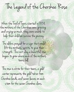 This is why I have a cherokee rose tattooed on my arm. The Legend of the Cherokee Rose Native American Prayers, Native American Spirituality, Native American Cherokee, Native American Symbols, Native American History, American Indians, Native Symbols, Indian Symbols, American Indian Quotes