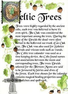 Celtic Trees Druid