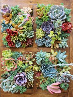 SALE Window Succulent Vertical Garden by SucculentWonderland
