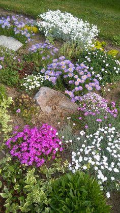 Rockery Garden, Rock Garden Plants, Sloped Garden, Lawn And Garden, Hillside Landscaping, Landscaping With Rocks, Landscaping Plants, Front Yard Landscaping, Small Natural Garden Ideas