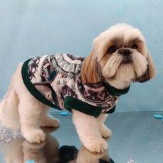 Pet Shop, Shih Tzu, Love Dogs, Groomsmen, Animales, Cats, Pet Store